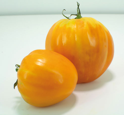 "Tomate allongée ""Ochsenherz Orange"""